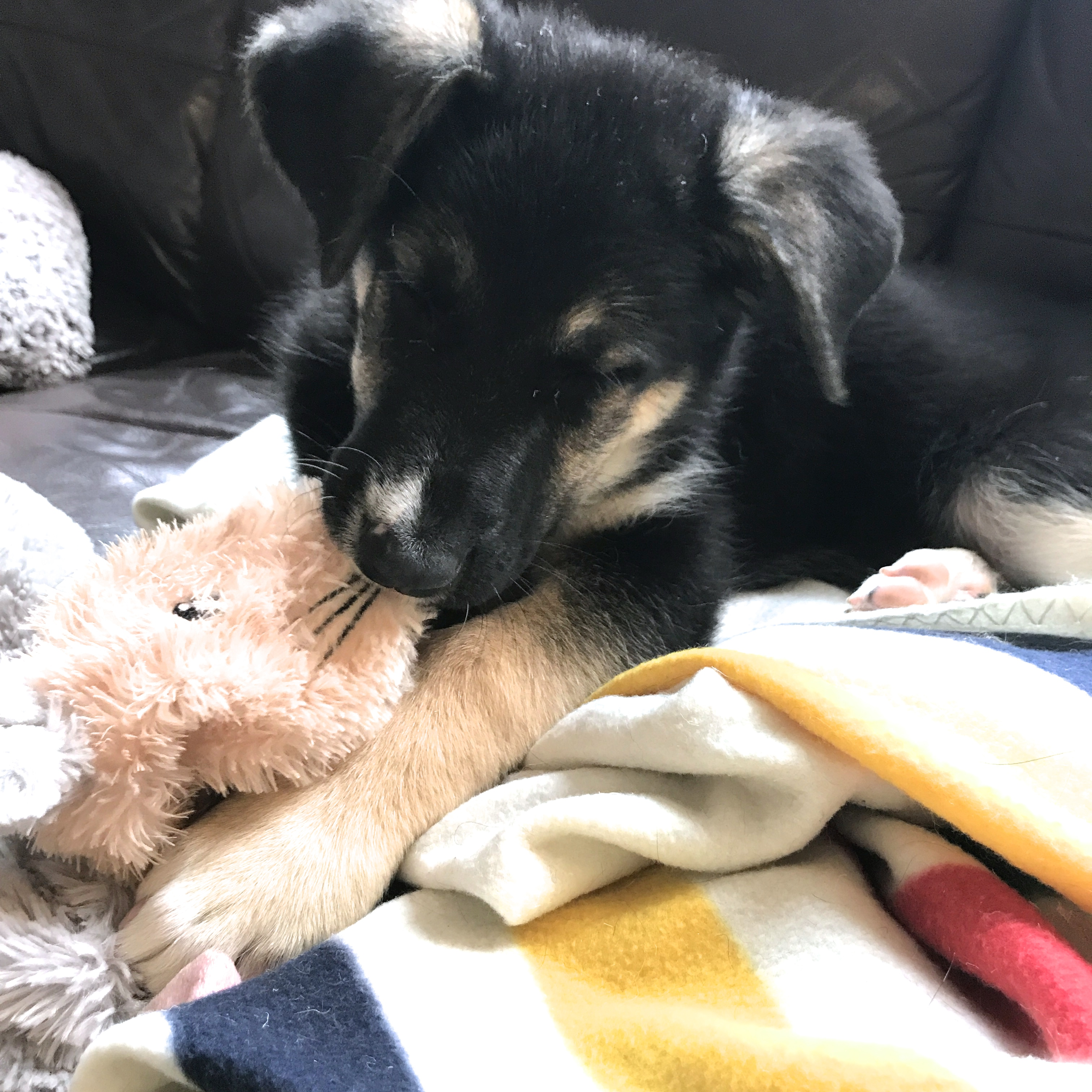 Puppy with toy and Hudson's Bay Blanket.